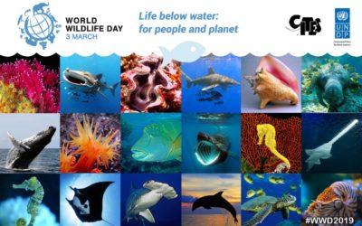 World Wildlife Day – 3 March 2019