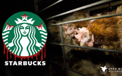 Open Wing Alliance relaunches Global Cage-Free campaign against Starbucks