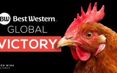Best Western commits to going cage-free by 2025
