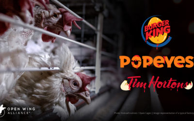 Join the global movement against the cruel treatment of chickens!