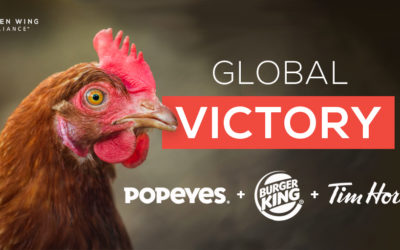 Breaking news: Restaurant Brands International announces global-cage free commitment
