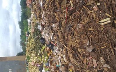 FLEAT: Clean-up campaign at Area 25, Nsungwi Market, Lilongwe