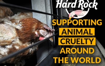 Tell Hard Rock to go cage-free globally