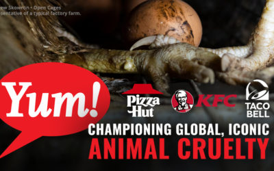 Tell Yum! Brands to go cage-free globally