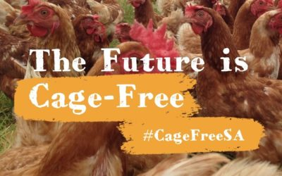 Raise your voice and join us #CageFreeSA