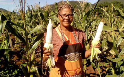 """Press Release: African Faith Communities Tell Gates Foundation, """"Big Farming is No Solution for Africa"""""""